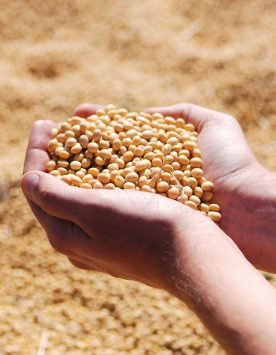 soybean_1_wh1000
