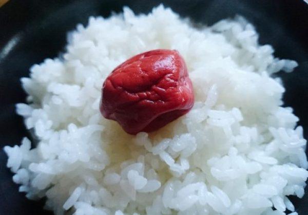 umeboshi-gohan_1